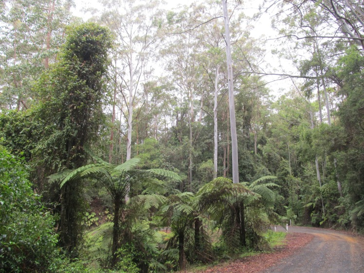 Just your average gravel path through the Australian rainforest