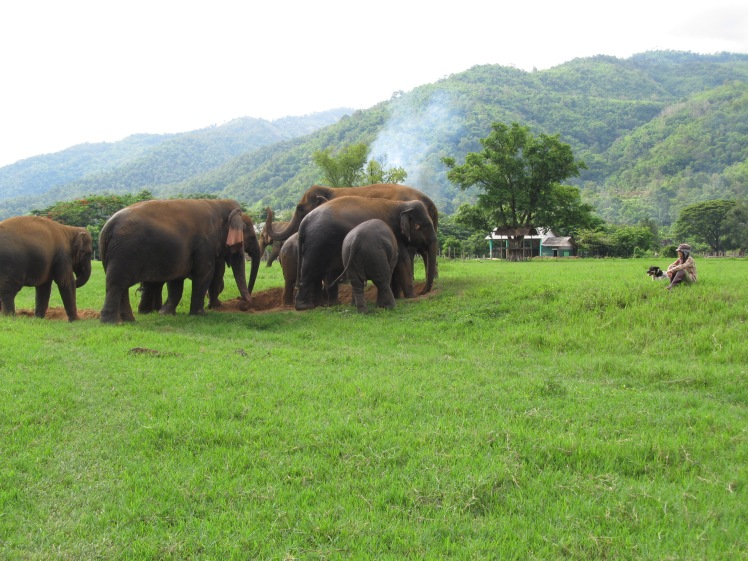 Lek with her herd at the Elephant Nature Park, northern Thailand. A place I've encouraged many travellers to visit.