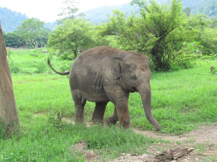 Think this baby elephant looks cute and harmless? Think again.