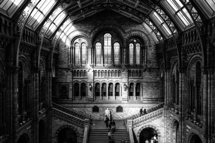 Inside the Natural History Museum via Morten Diesen @ Flickr