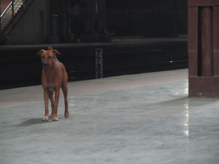 This dog ruled the train station in Ahmedabad.
